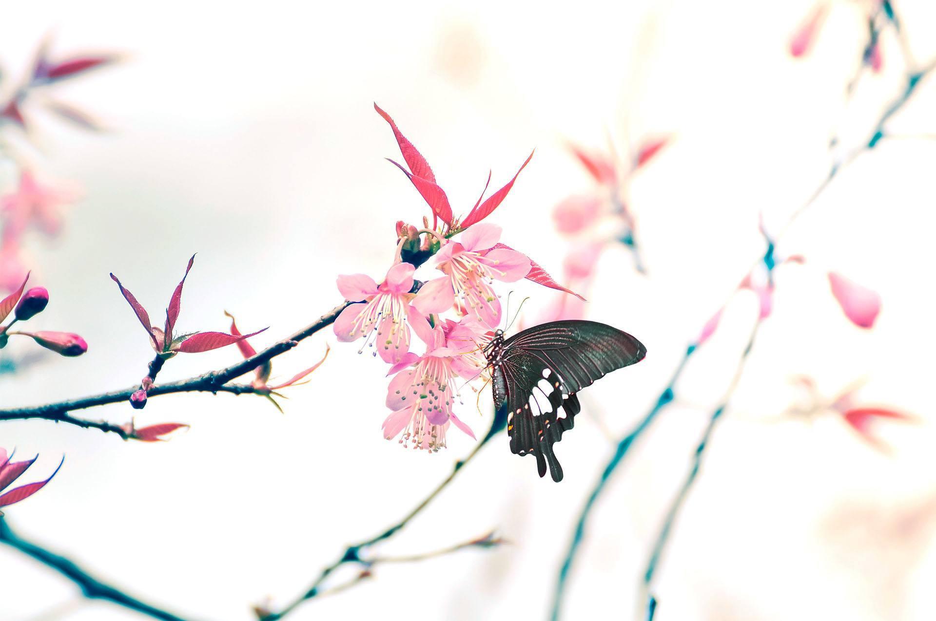Unsere Philosophie –Die Symbole Schmetterling und Kirschblüte